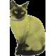 Collar natural anti pulgas y garrapatas para gatos